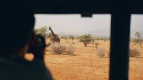 徒步旅行队的摄影师在非洲为一头野生长颈鹿照相在汽车外面