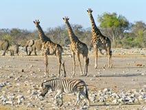 徒步旅行队野生生物 库存图片