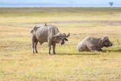 徒步旅行队-两犀牛 免版税库存照片