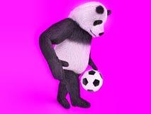 徒步追逐一个足球在紫色背景 感人的逗人喜爱的熊猫足球运动员 玩杂耍的球熊 库存图片