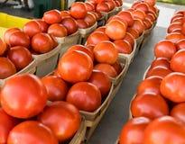 得克萨斯农夫` s市场产物蕃茄 免版税库存照片