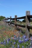 得克萨斯分裂栅栏在春天 免版税图库摄影