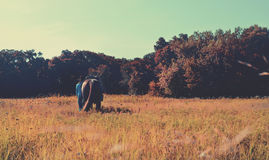得克萨斯大农场场面 免版税库存照片