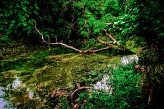 得克萨斯小河 库存图片