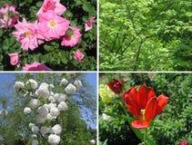 得克萨斯开花植物和鸟 免版税库存图片