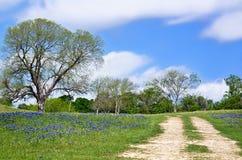 得克萨斯沿乡下公路的矢车菊远景 免版税库存图片