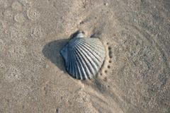 得克萨斯海岸的海壳 库存图片