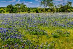 得克萨斯领域的一个美好的广角看法覆盖与著名得克萨斯矢车菊。 库存照片