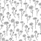 得出无缝的样式的春黄菊传染媒介 被隔绝的雏菊野花和叶子背景 被刻记的草本 免版税库存图片
