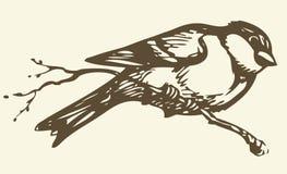 得出花卉草向量的背景 分行小的北美山雀 免版税库存照片