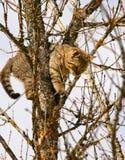 得到的某人在猫下 免版税库存图片