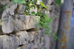 得到阳光和养料的植物 免版税库存照片