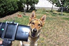 得到selfie的狗 免版税库存图片
