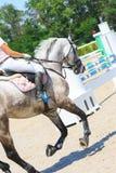 御马者在超越障碍马术比赛的竞争中骑一匹灰色马 免版税图库摄影