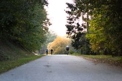 循环在一骑自行车的人们通过获得一条的漫长的路的一个森林乐趣 骑自行车的人,骑自行车,秋天 风景,健康,乐趣,喜悦 免版税库存图片