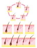 循环头发 免版税库存照片