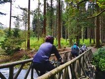 循环横跨在Forrest的一个老木桥的山骑自行车的人 免版税库存图片