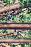 循环的想法-从瓶子的灯 图库摄影