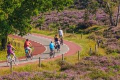 循环的游人在荷兰国家公园Veluwezoom 免版税库存图片