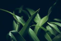 微光在黑暗的叶子绿色 库存图片