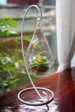 微型一个玻璃花瓶的仙人掌多汁植物 免版税库存照片