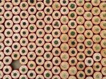 微型仙人掌植物顶视图红色罐的在仙人掌农场 免版税库存照片