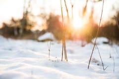 微型冬天风景 库存图片