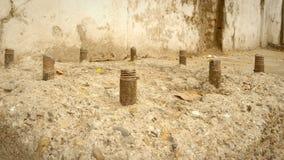 微型地面生活自然射击  库存照片