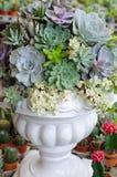 微型多汁植物种植装饰 免版税库存图片