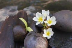 微型套泡末浴阵雨与花和pebbl的胶凝体液体 库存图片