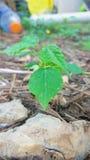 微型植物 免版税库存照片