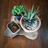 微型植物 免版税库存图片