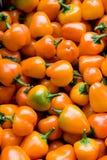 微型橙色胡椒 免版税库存图片