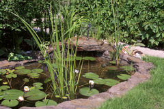 微型池塘 免版税库存照片