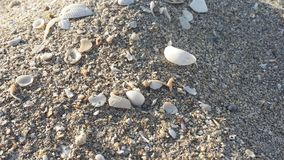 微型海壳沙丘 图库摄影