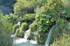 微型瀑布在普利特维采湖群国家公园,在克罗地亚 免版税图库摄影