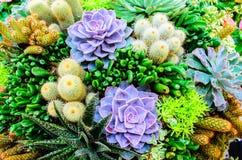 微型热带庭院 库存图片