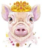 微型猪水彩画象图片