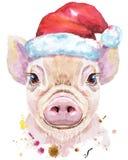 微型猪水彩画象在圣诞老人帽子的 图库摄影图片