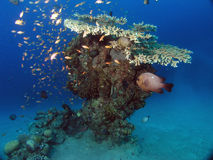 微型礁石 库存图片