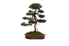 微型结构树盆景 免版税库存照片