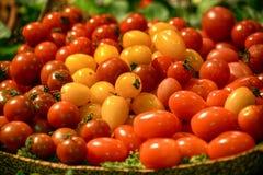 微型蕃茄 图库摄影