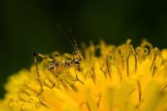 微型蚂蚱 免版税库存照片