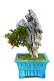 微型香港金桔盆景植物用果子 库存照片