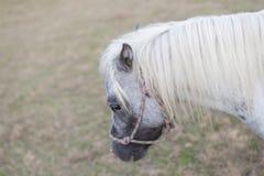 微型马 免版税图库摄影