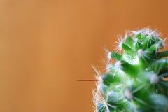 微型仙人掌植物宏观射击有水滴的,与自由空间的橙色布朗背景设计的 免版税库存照片