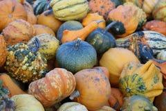 微型pumpkinsfresh和自然 免版税库存图片