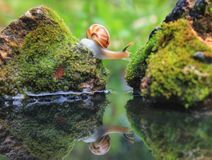 微小的世界蜗牛 库存照片