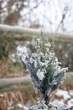 微小的圣诞树冷杉拂去灰尘与外面雪 库存图片