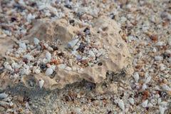 微小的壳海滩,与石灰石岩石的纹理 库存图片